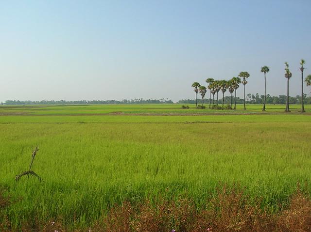 Cambodia countryside scenery   Flickr - Photo Sharing!