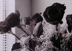 Black Roses Delivery, Buy Black Roses