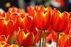 Tulips Lanterns_MG_0223_2900 by 918monty