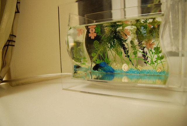 弧形鱼缸设计图