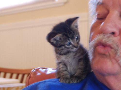 dad hearts kitties