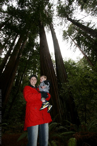 rachel & sequoia under the heritage grove redwoods    MG 7900