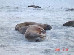 Seal @ Otago Peninsula