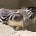 San Diego Zoo 088
