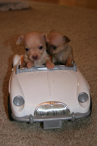 Cool Puppies Emily Jenkins Flickr