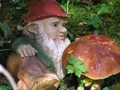 garden gnome, tree, medicinal mushroom, lawn ornament, bolete, penny bun,