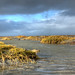 High tide on Schiermonnikoog