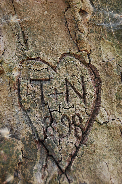 Heart carved into tree flickr photo sharing