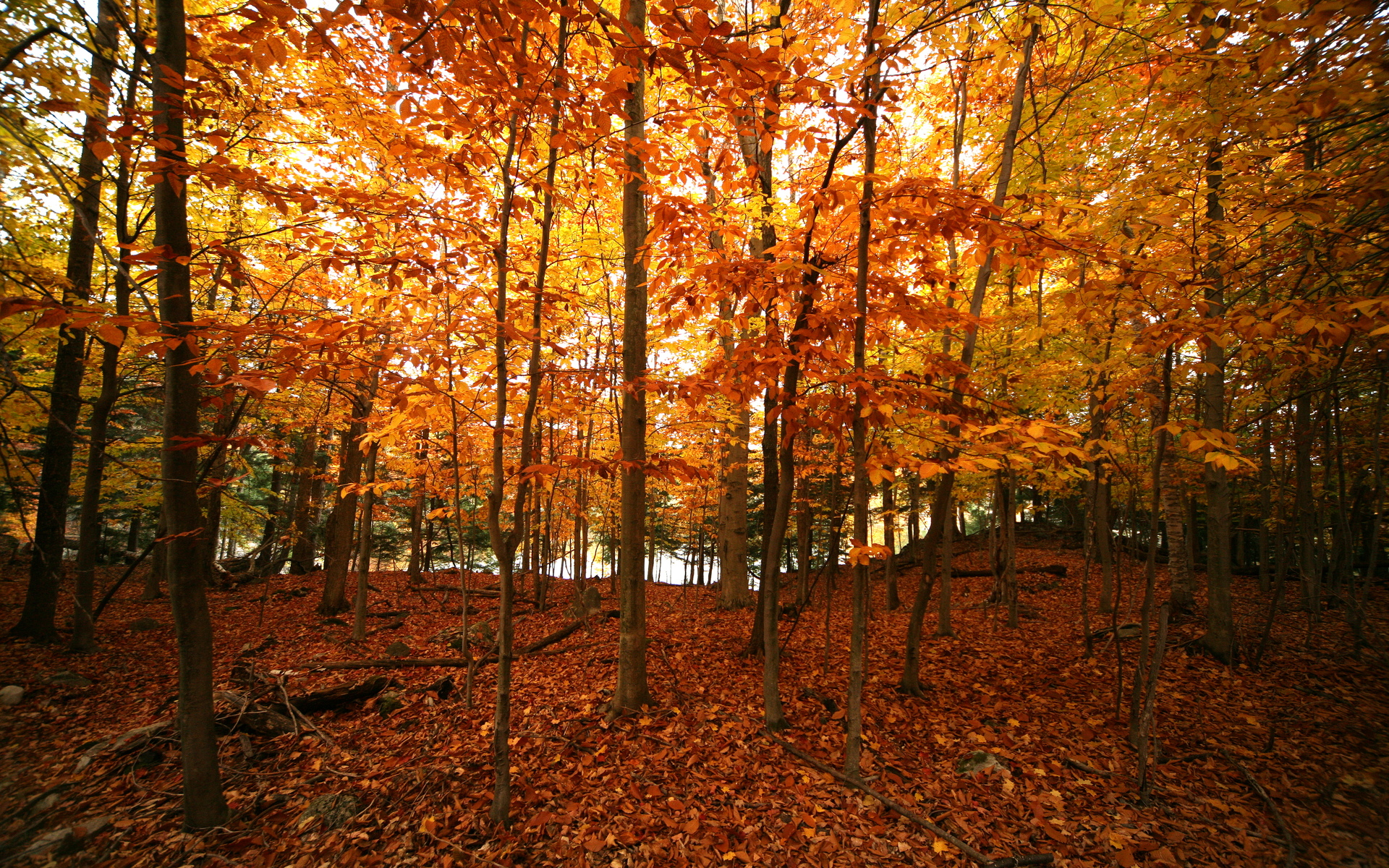 Fall Desktop Backgrounds Widescreen