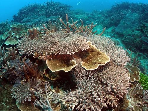 眺石海洋保護區。(攝影:郭兆陽)