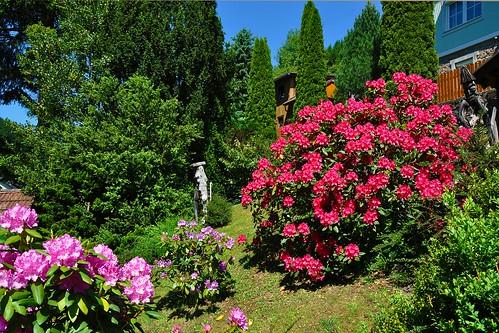 Garden in Waldbach