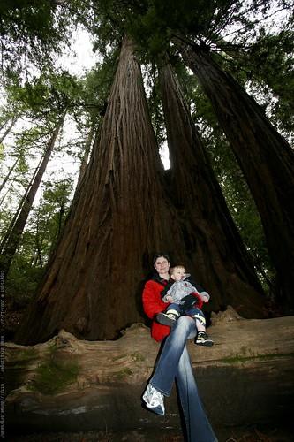 rachel & sequoia under the heritage grove redwood trees    MG 7952