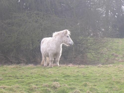 Shortlegged horse-thing