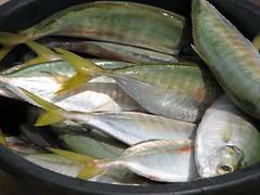 herring(0.0), produce(0.0), dish(0.0), sardine(0.0), milkfish(0.0), mussel(0.0), animal(1.0), mackerel(1.0), fish(1.0), fish(1.0), seafood(1.0), bonito(1.0), food(1.0),
