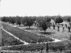 Orchard, Barringun artesian bore