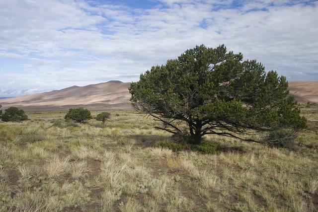 Parque nacional y reserva Grandes Dunas de Arena. Colorado. Estados Unidos