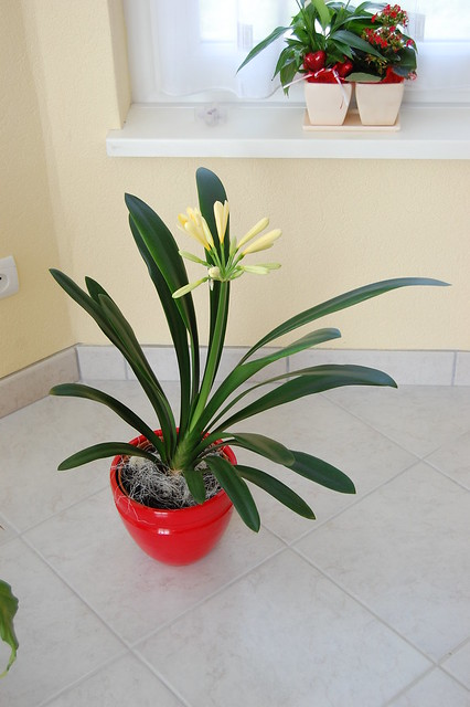 Plante d 39 int rieur flickr photo sharing for Plante bambou interieur