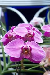 cattleya labiata(0.0), cattleya trianae(0.0), flower(1.0), purple(1.0), plant(1.0), macro photography(1.0), laelia(1.0), flora(1.0), moth orchid(1.0), pink(1.0), petal(1.0),