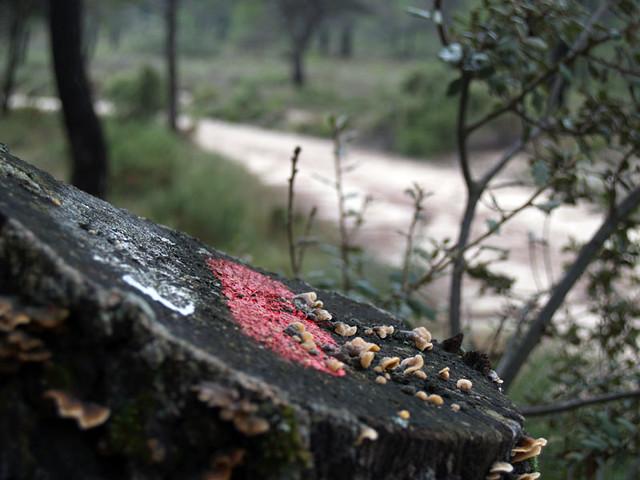 GR-7 en la Font Roja