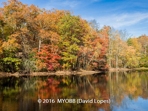 allaire allairestatepark em1 nj newjersey omd olympus fall foliage leafs nature park