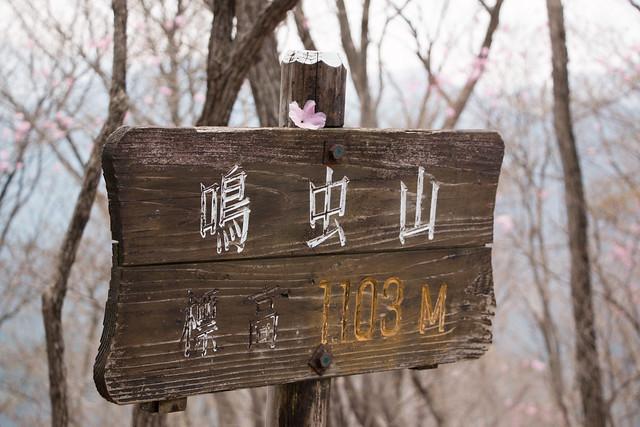 20150425-鳴虫山-0241.jpg