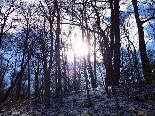 El bosque de Schönbrunn