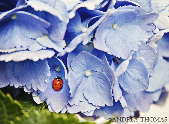 Week 20: Ladybug
