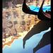 Black Swans in Venice by ! . Angela Lobefaro . !
