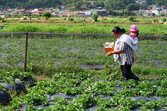 flower(0.0), garden(0.0), gardener(0.0), agriculture(1.0), shrub(1.0), farm(1.0), field(1.0), soil(1.0), produce(1.0), farmworker(1.0), crop(1.0), rural area(1.0), plantation(1.0),