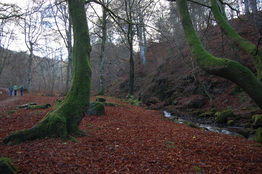 Birks of Aberfeldy