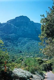 South Africa 394 251093 Cape Town - Kirstenbosch Botanical Gardens (The View)
