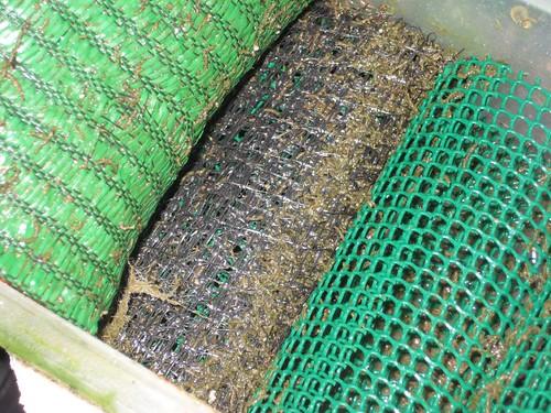 Ver tema filtro casero ayuda for Filtro casero para estanque