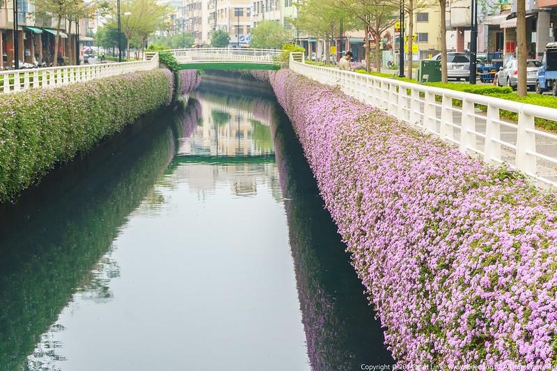 今日熱門文章:【高雄】幸福川.紫花馬櫻丹