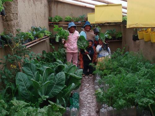 El alto productivo hortalizas por pisos for Como cultivar hortalizas