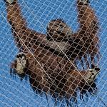 Los Angeles Zoo 081