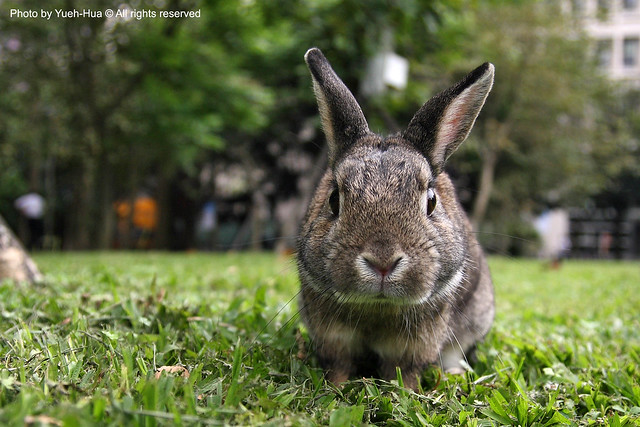 Schoolmate's Rabbit in NTUST