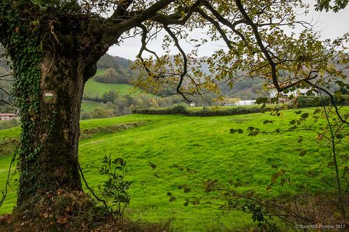 2blog 2tumblr 2ig árbol tree prado meadow señal signal baztán navarra otoño vacaciones2015 telleria españa esp