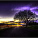 Purple Euphoria by Extra Medium
