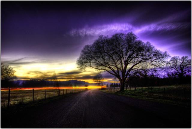Purple Euphoria
