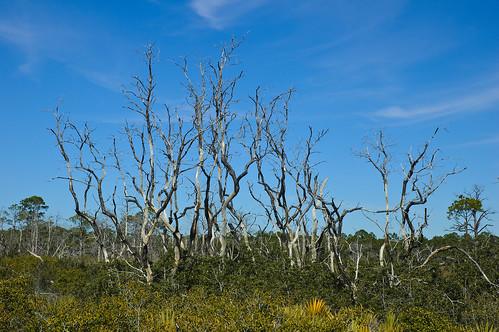 seaside florida deadtree walton highway30a