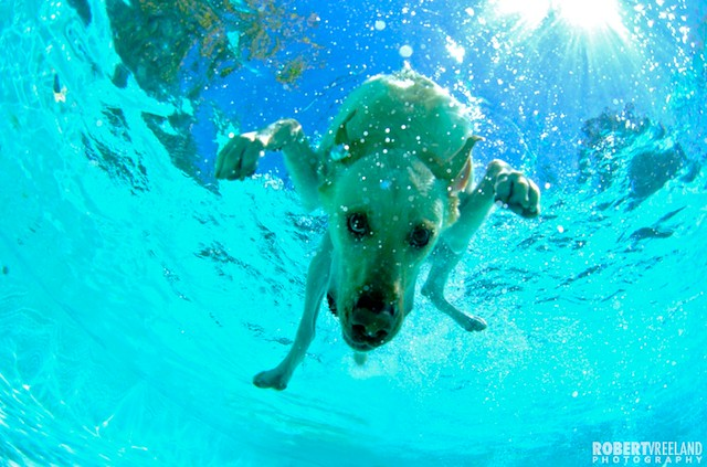 Dogs Underwater A Gallery On Flickr