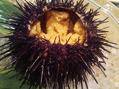 animal(0.0), marine biology(0.0), sea anemone(0.0), sea urchin(1.0), echinoderm(1.0), close-up(1.0),