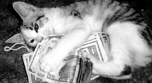 Cats Rolling in Money Cats · Precious Counting Money