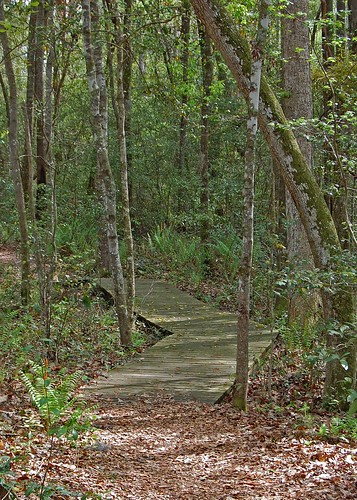southcarolina hikingtrails hamptoncounty lakewarrenstatepark