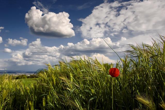 spring wallpaper flickr photo sharing