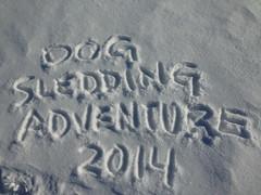 Dog Sledding March 2014