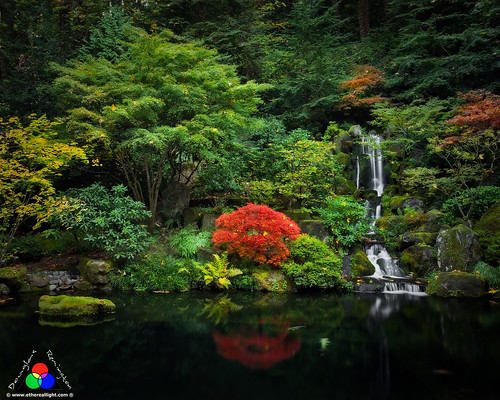 Serenity at the Koi pond by Douglas Remington - Ethereal Light® Photography