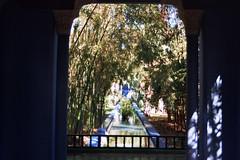 Jardin Majorelle, Marrakech, Morocco 2006