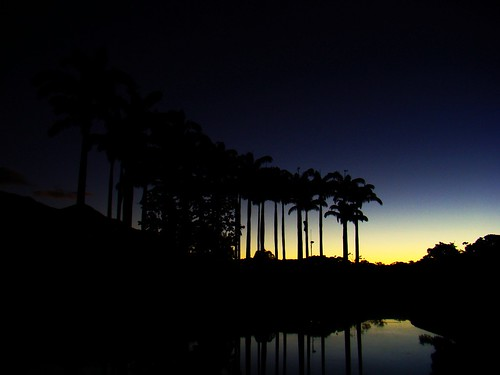 sky sunrise palms reflecting venezuela lagoon caracas amanecer cielo laguna reflejos palmas parquedeleste betterthangood