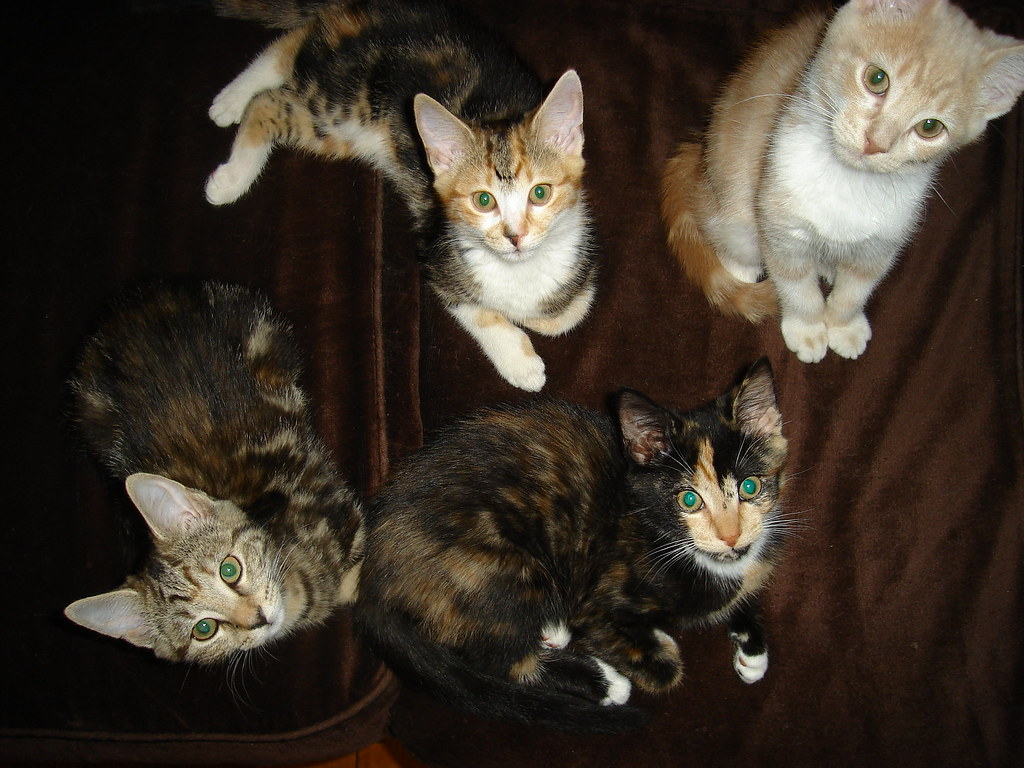 the first foster kittens graduates for 2008